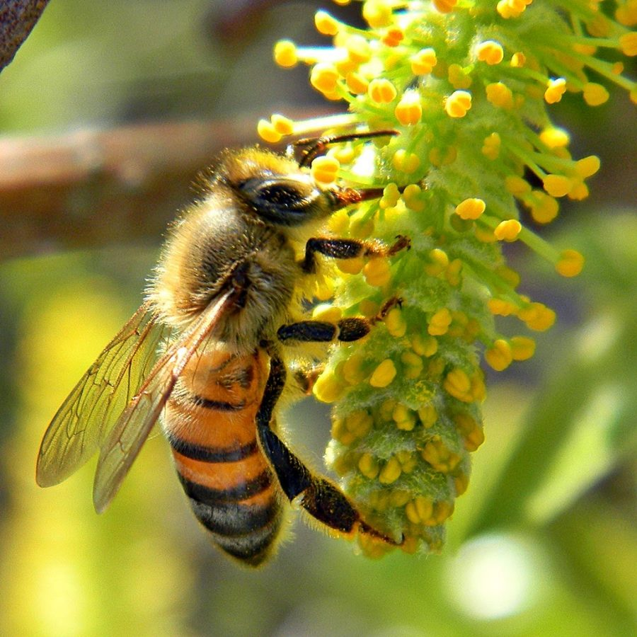 Busy+being+bees